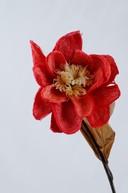 Floare exotica uscata - Culoare rosie