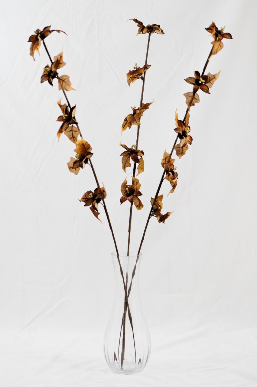 Floare exotica uscata