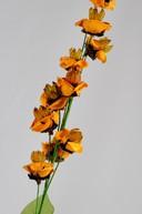 Floare exotica uscata - Culoare portocalie