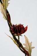 Floare exotica uscata - Culoare bordeaux
