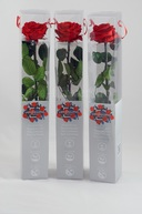 Set 3 Trandafiri criogenati Premium Rosii
