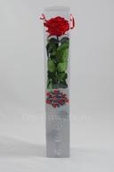 Trandafir criogenat Premium Rosu