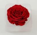Cap trandafir criogenat Amorosa King Rosu