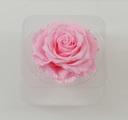 Cap trandafir criogenat Amorosa King Roz
