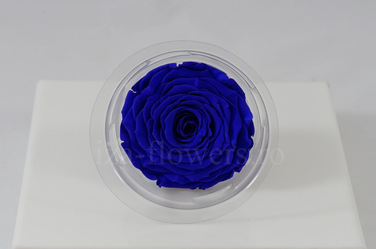 Cap trandafir criogenat albastru rotund