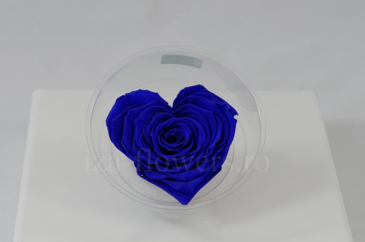 Cap trandafir criogenat albastru in forma de inima