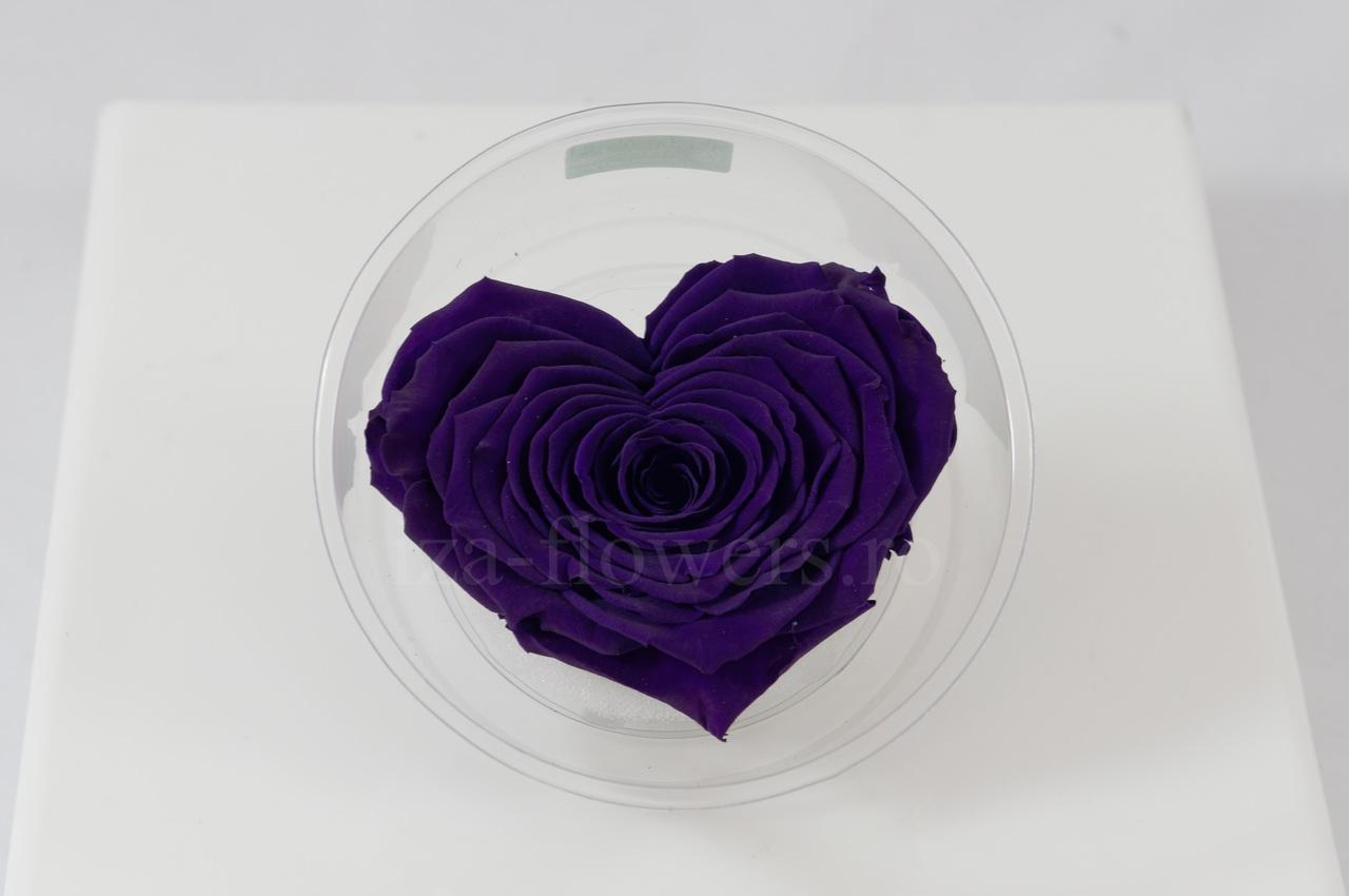 Trandafir criogenat mov in forma de inima