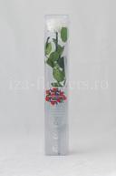 Trandafir criogenat Premium Alb