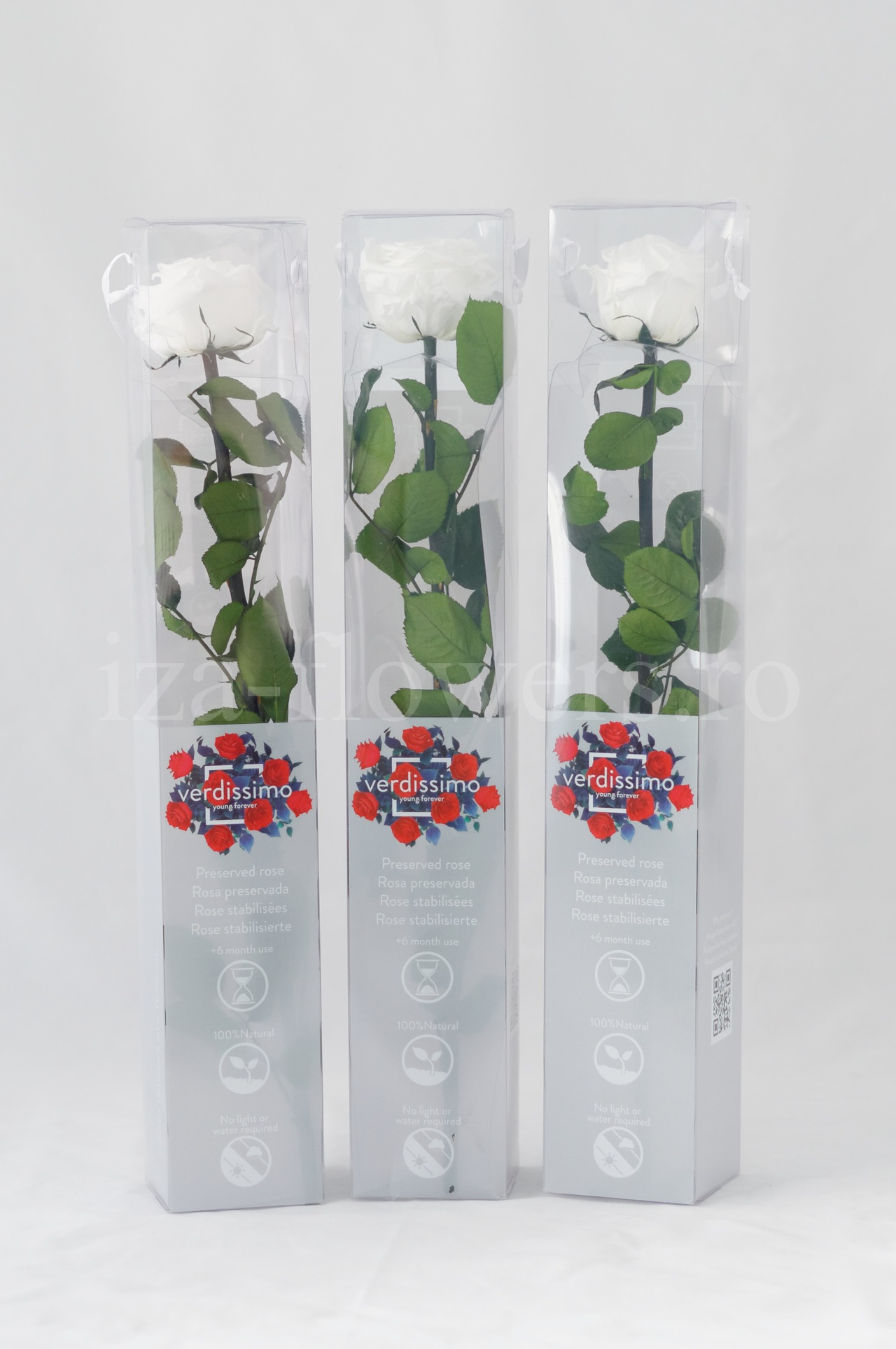 Set 3 Trandafiri criogenati Standard Albi