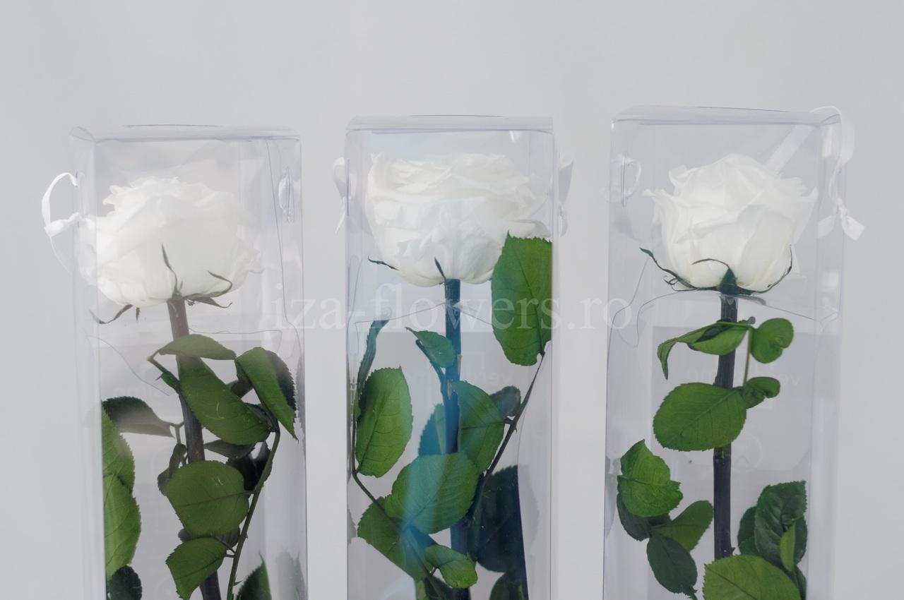 Set 3 Trandafiri criogenati Premium Albi