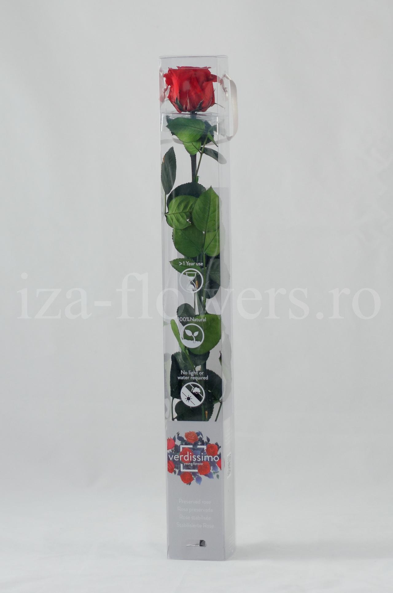 Trandafir criogenat Standard Rosu