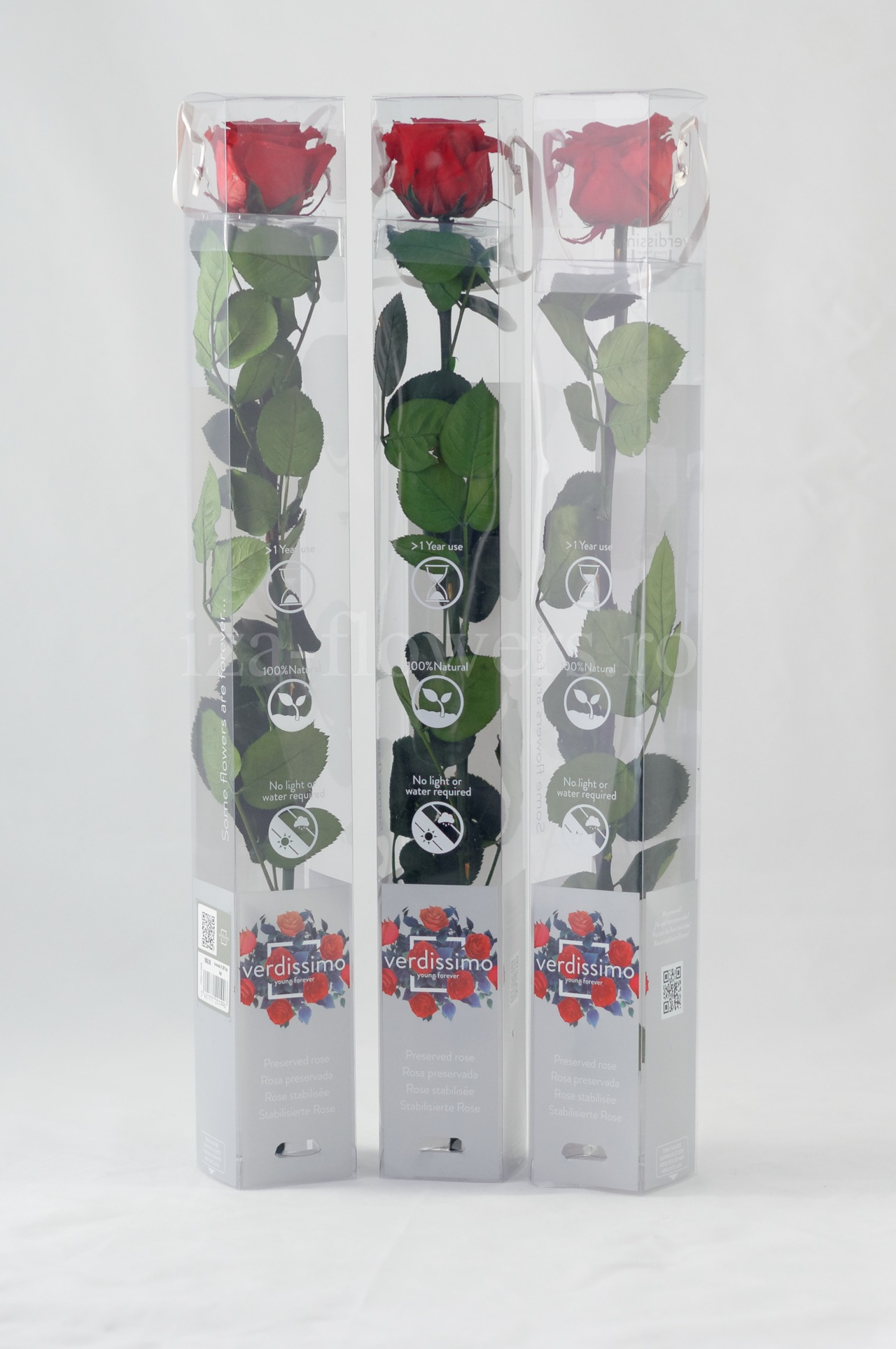 Set 3 trandafiri criogenati Standard rosii