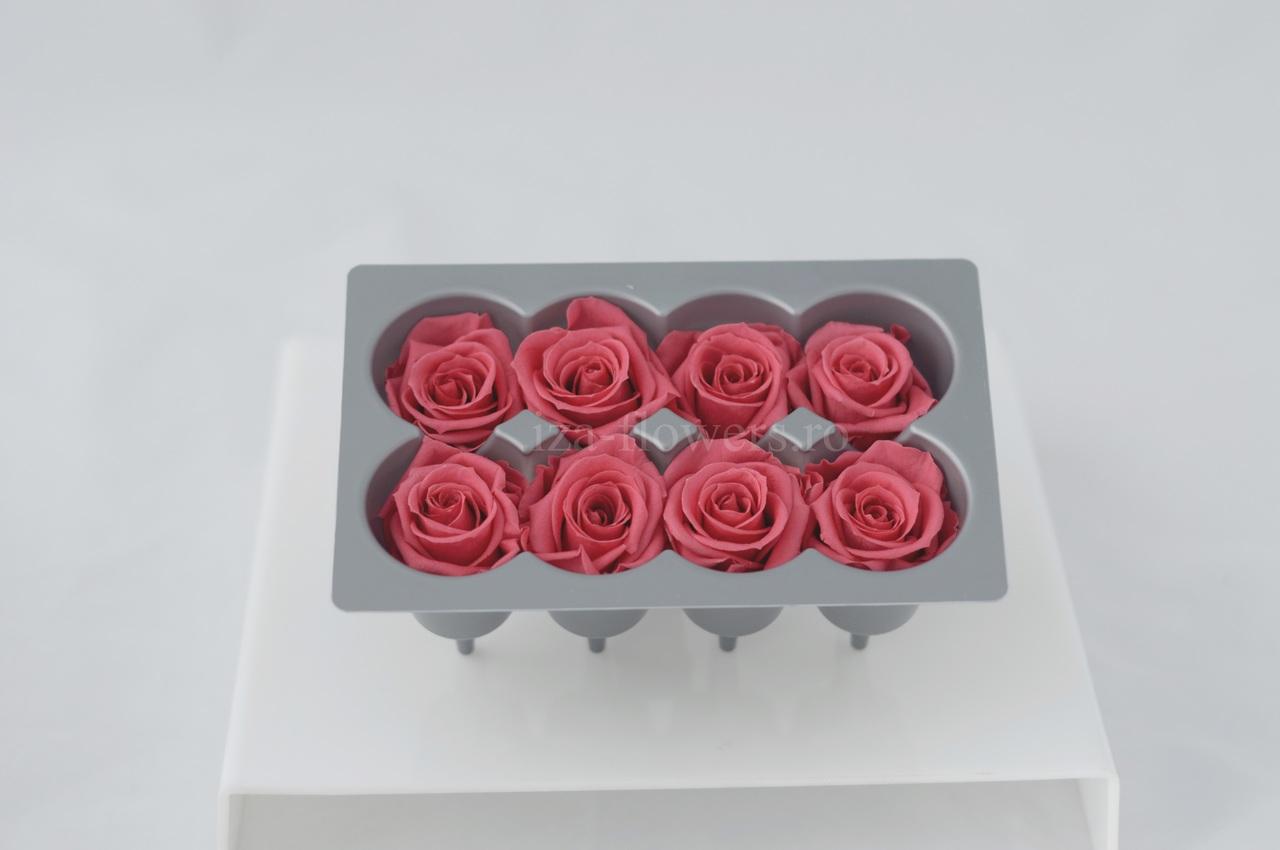 Cutie 8 capete trandafiri criogenati roz