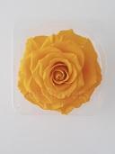Cap trandafir criogenat Amorosa King Galben