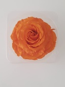 Cap trandafir criogenat Amorosa King portocaliu