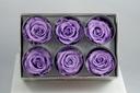 Cutie 6 capete trandafiri criogenati movi Extra