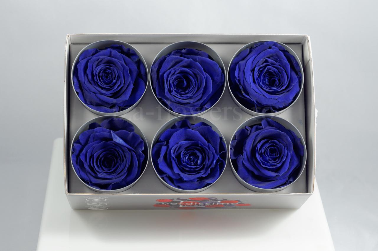 Cutie 6 capete trandafiri criogenati albastrii Extra