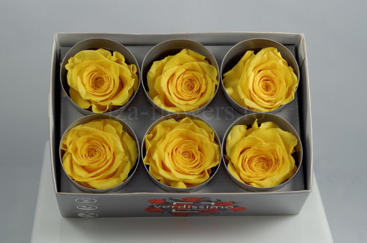 Cutie 6 capete trandafiri criogenati galbeni Extra