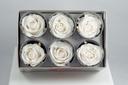 Cutie 6 capete trandafiri criogenati albi Extra