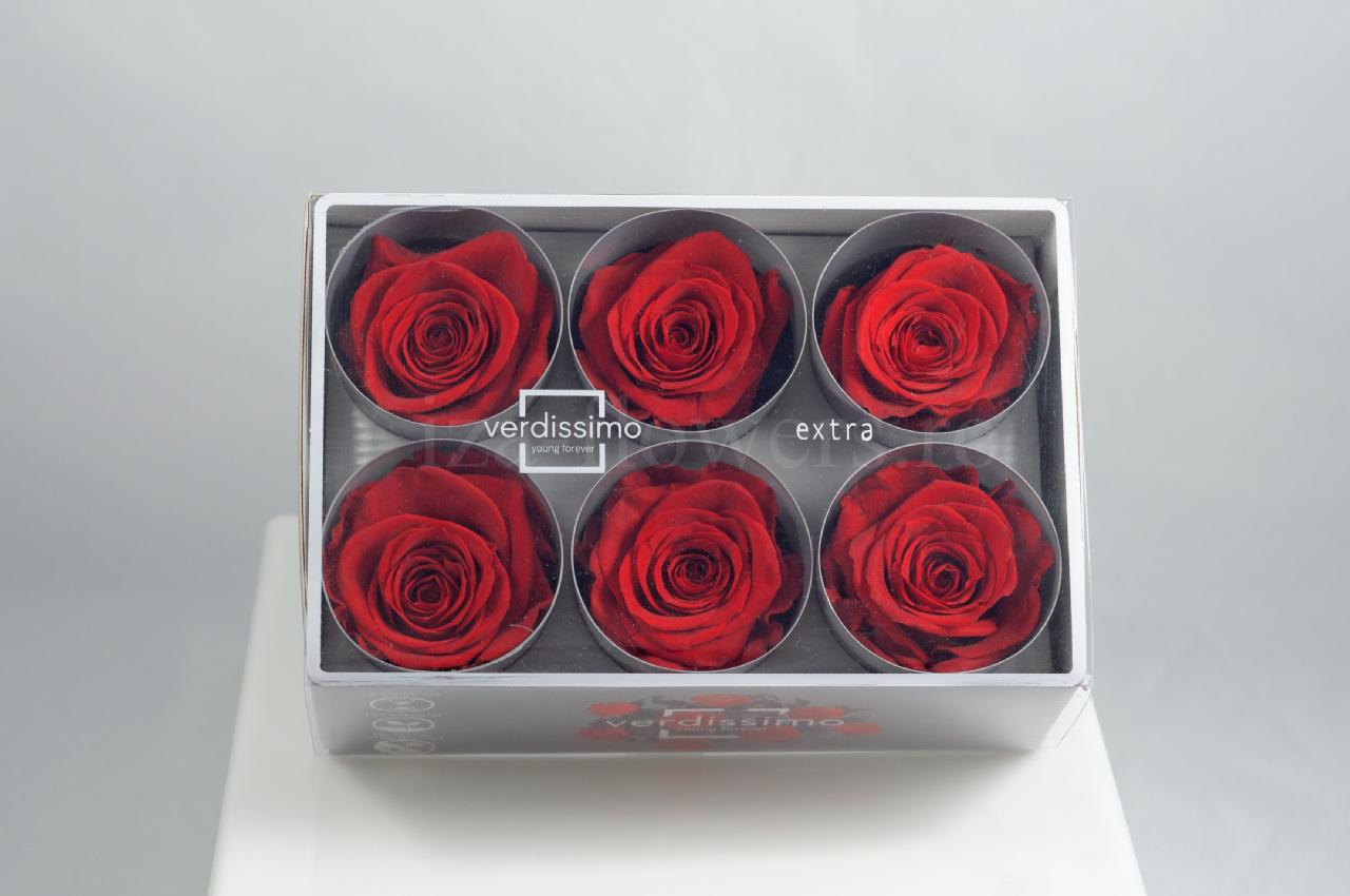 Cutie 6 capete trandafiri criogenati rosii Extra