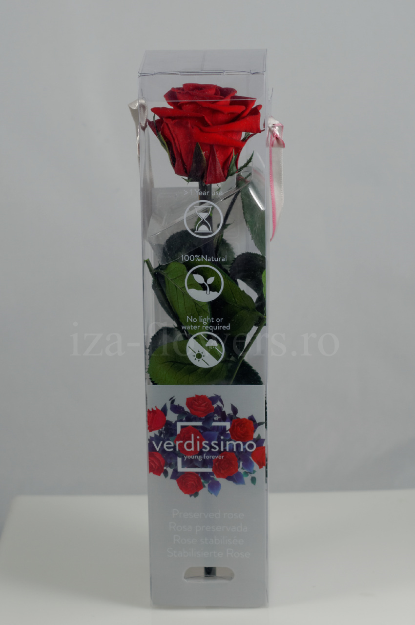 Trandafir criogenat mini Rosu