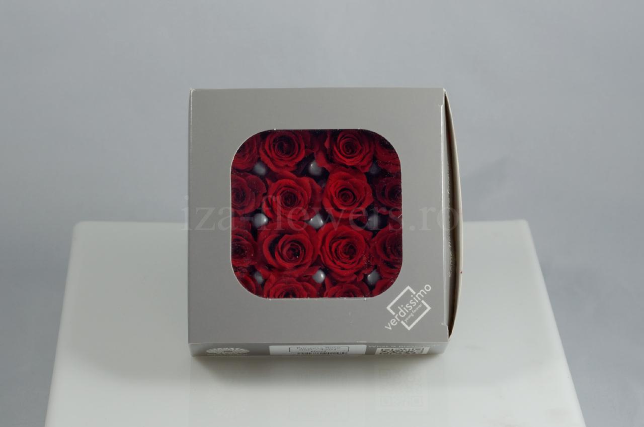 Cutie 16 capete trandafiri criogenati rosii