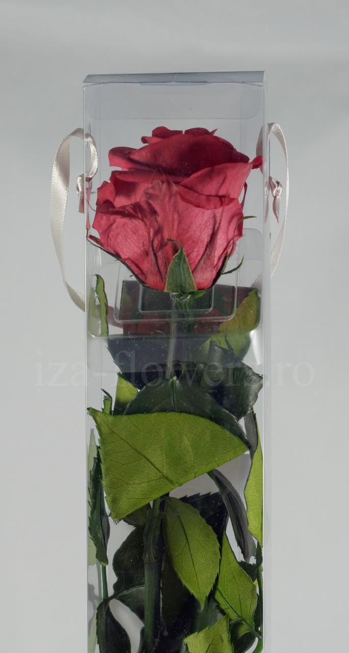 Trandafir criogenat Standard Mov inchis