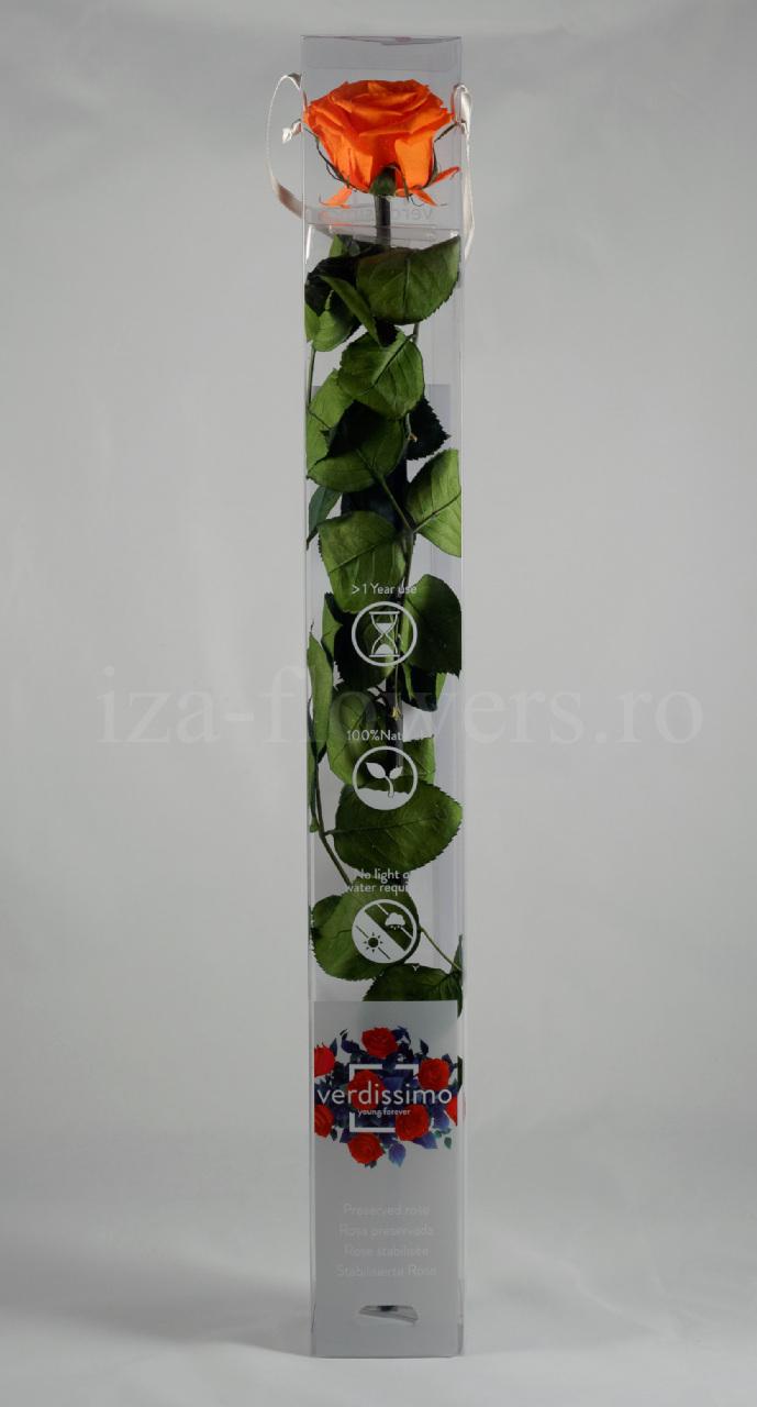 Trandafir criogenat Standard portocaliu