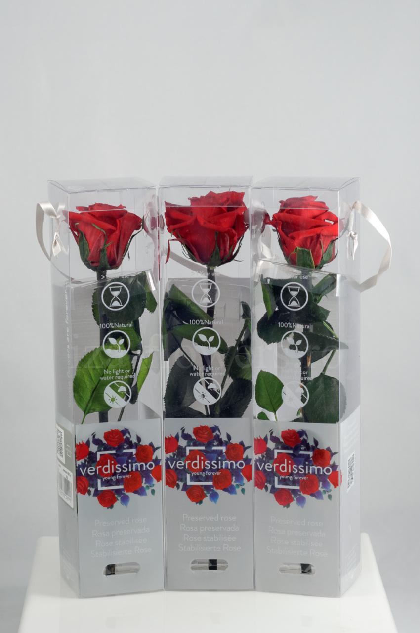 Set 3 trandafiri criogenati Mini